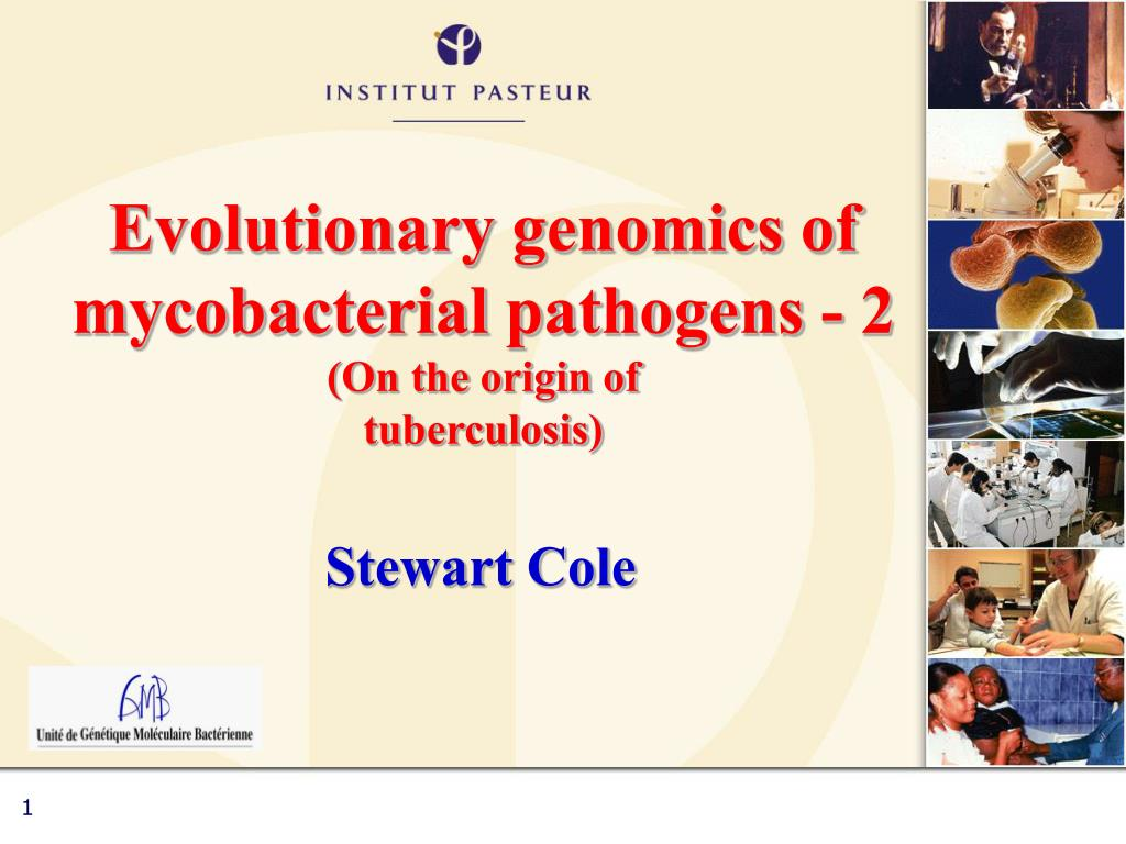 evolutionary genomics of mycobacterial pathogens 2 on the origin of tuberculosis l.
