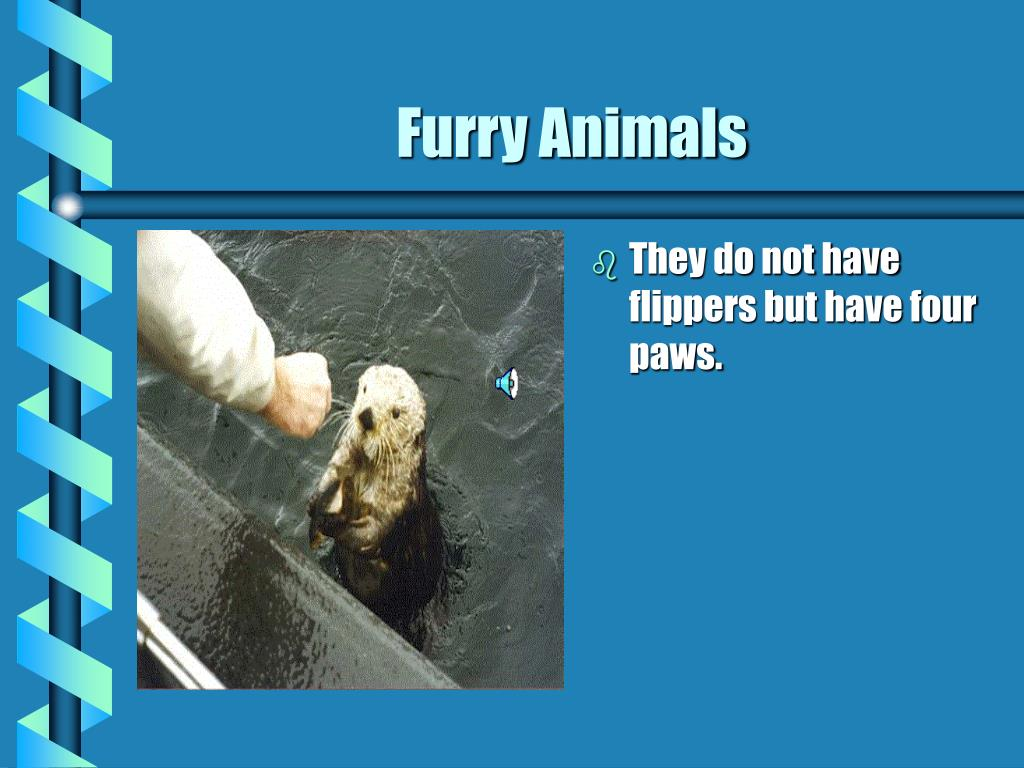 They do not have flippers but have four paws.