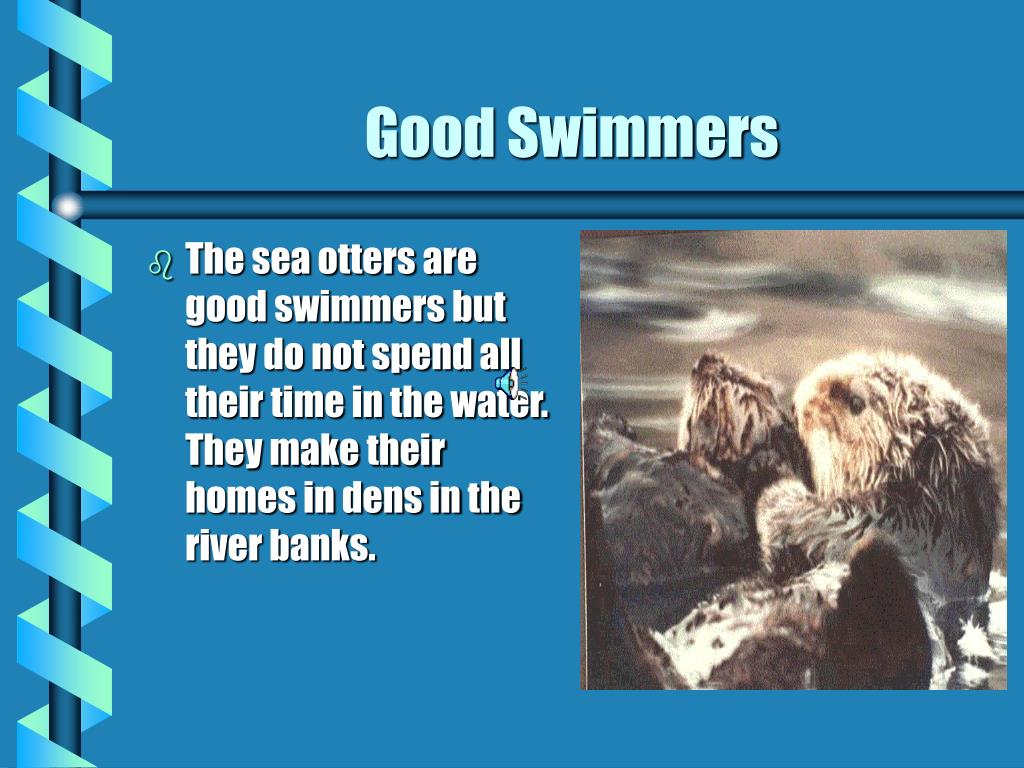 The sea otters are good swimmers but they do not spend all their time in the water. They make their homes in dens in the river banks.