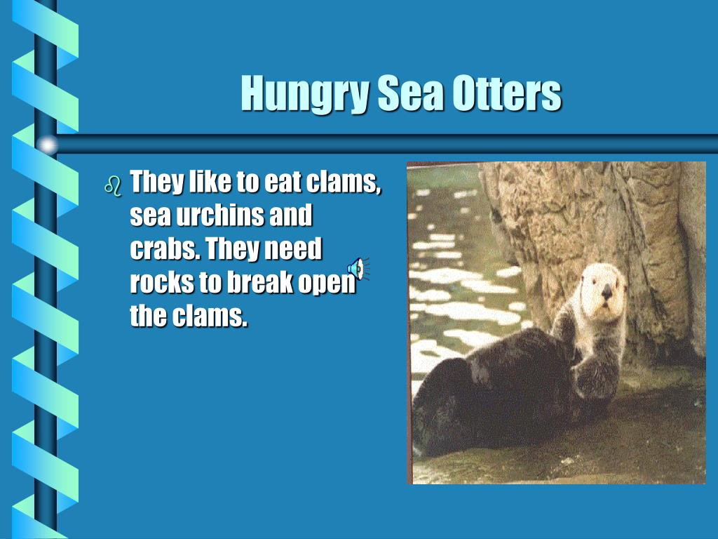 They like to eat clams, sea urchins and crabs. They need rocks to break open the clams.