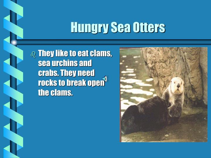 Hungry sea otters