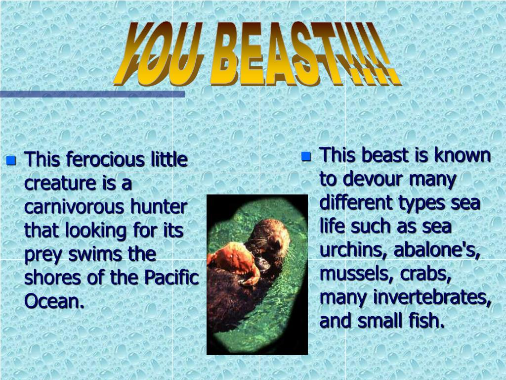 This ferocious little creature is a carnivorous hunter that looking for its prey swims the shores of the Pacific Ocean.