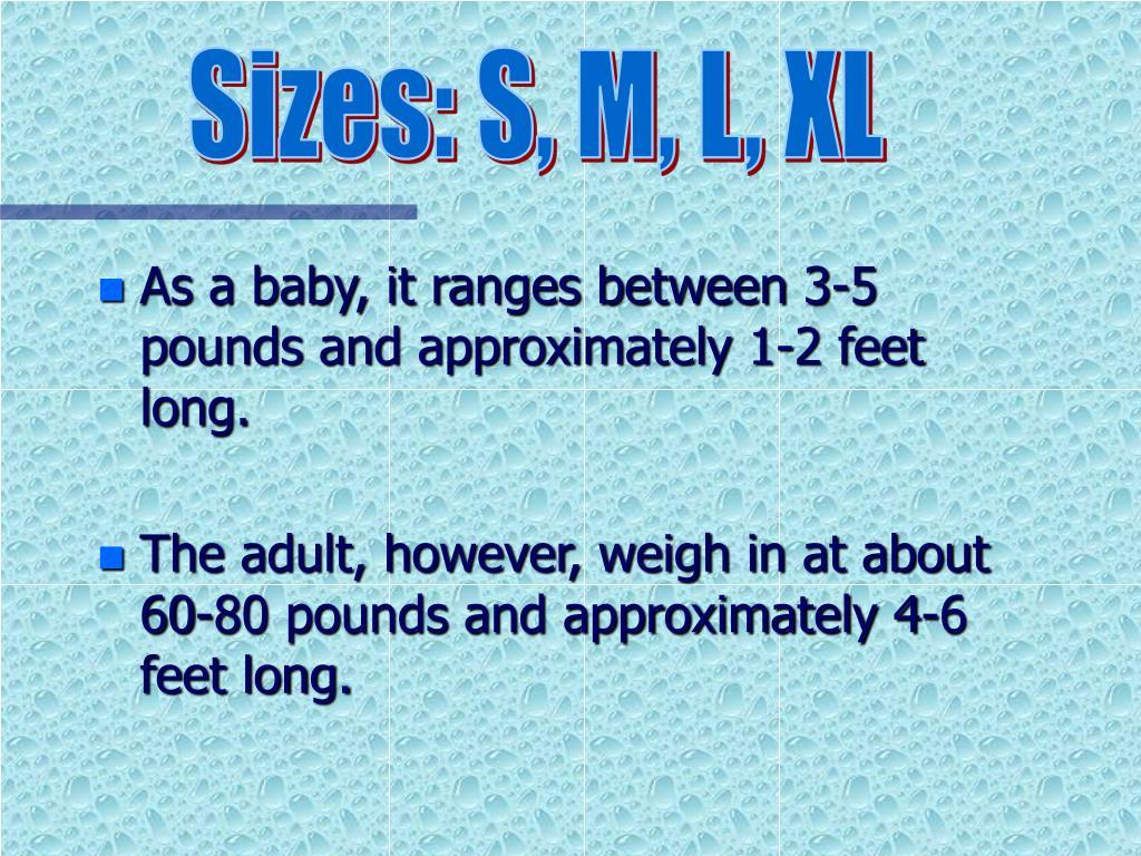 Sizes: S, M, L, XL