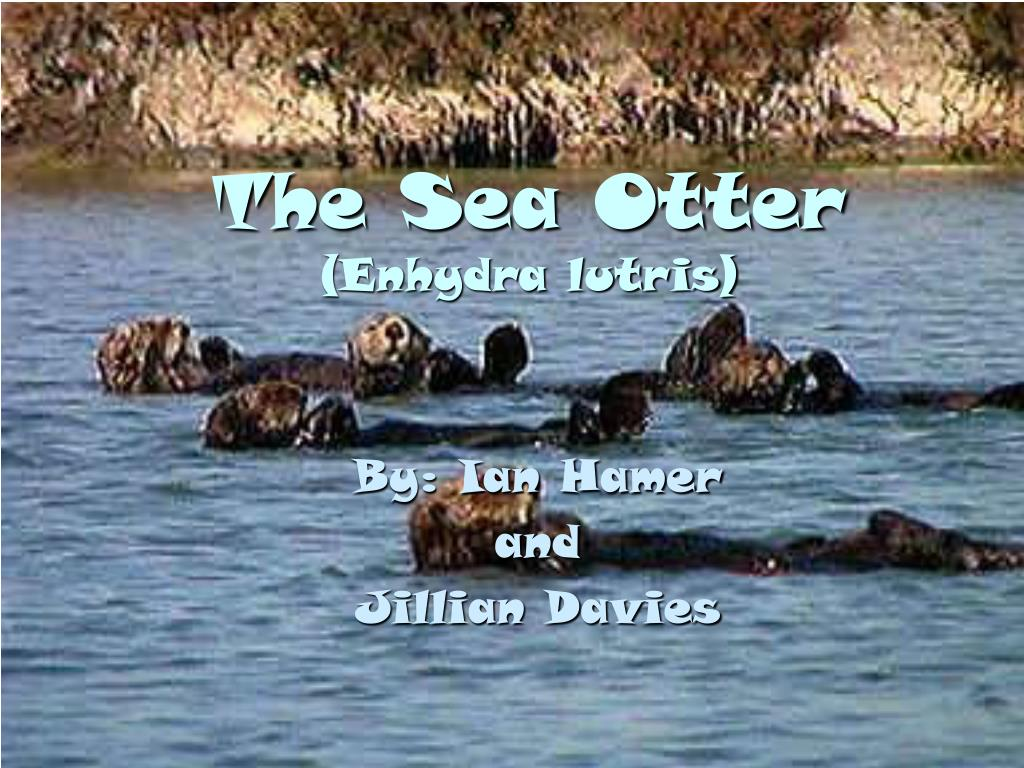 the sea otter enhydra lutris l.