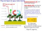 flujo de vapor de agua calor latente