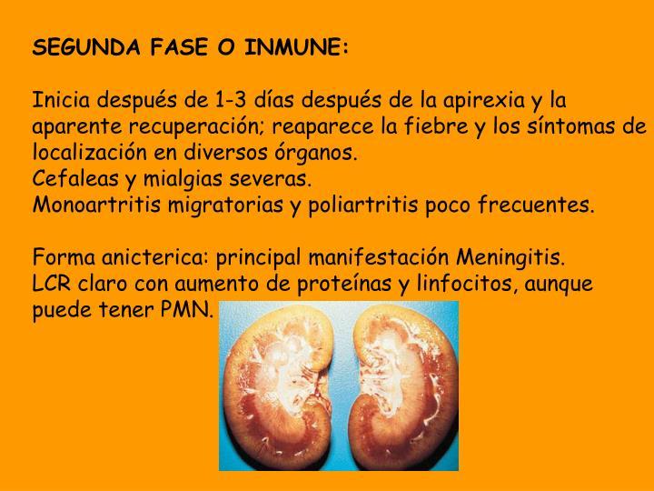 SEGUNDA FASE O INMUNE: