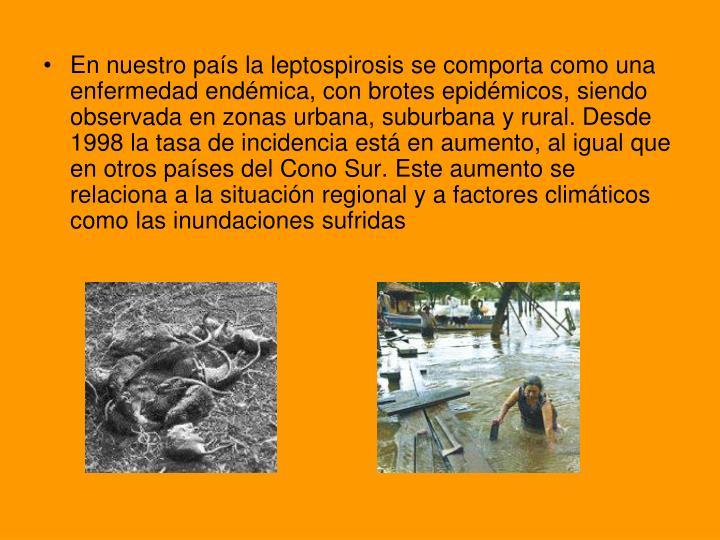 En nuestro país la leptospirosis se comporta como una enfermedad endémica, con brotes epidémicos, siendo observada en zonas urbana, suburbana y rural. Desde 1998 la tasa de incidencia está en aumento, al igual que en otros países del Cono Sur. Este aumento se relaciona a la situación regional y a factores climáticos como las inundaciones sufridas