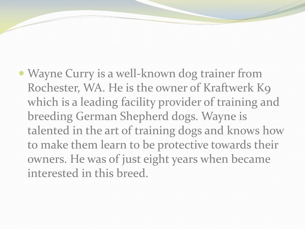 Wayne Curry is a well-known dog trainer from Rochester, WA. He is the owner of Kraftwerk K9 which is a leading facility provider of training and breeding German Shepherd dogs. Wayne is talented in the art of training dogs and knows how to make them learn to be protective towards their owners. He was of just eight years when became interested in this breed.
