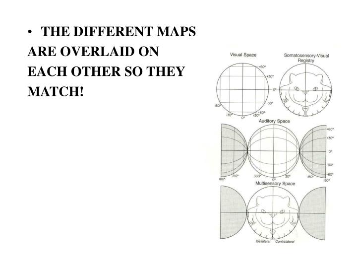 THE DIFFERENT MAPS