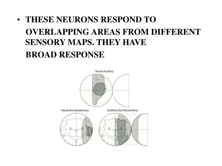 THESE NEURONS RESPOND TO