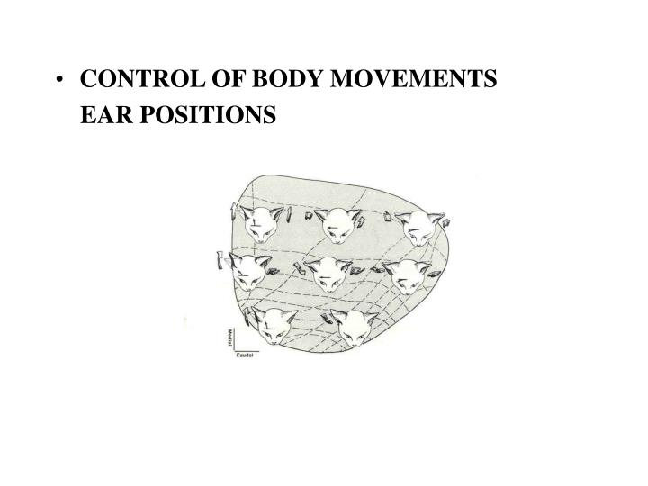 CONTROL OF BODY MOVEMENTS