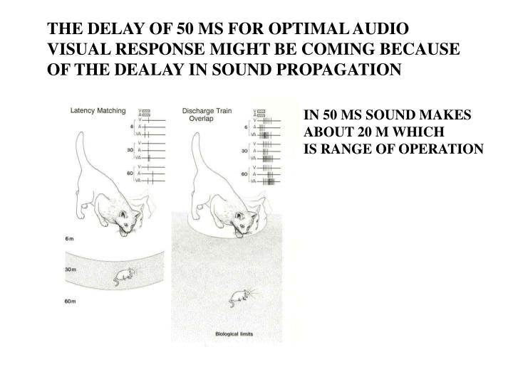 THE DELAY OF 50 MS FOR OPTIMAL AUDIO
