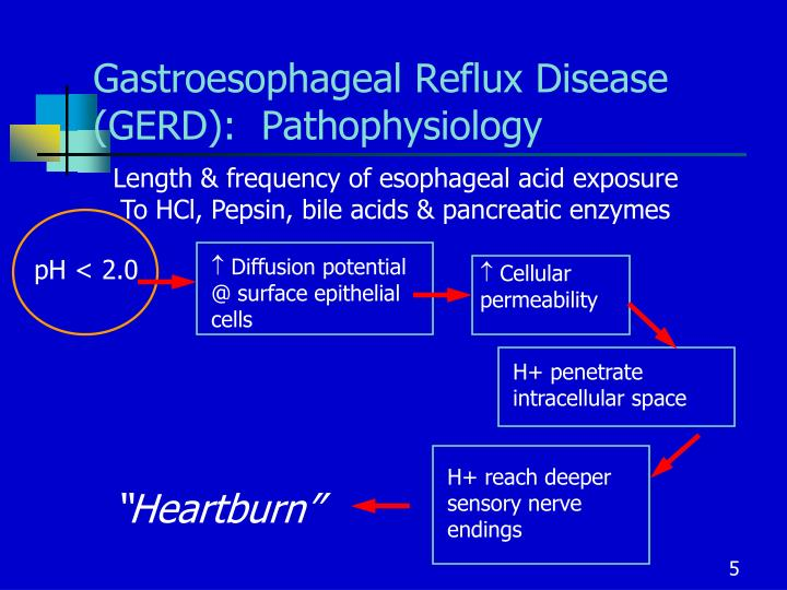 Gastroesophageal Reflux Disease (GERD):  Pathophysiology
