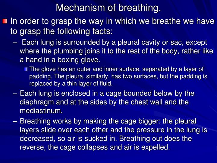 Ppt Introduction To The Respiratory System Powerpoint Presentation