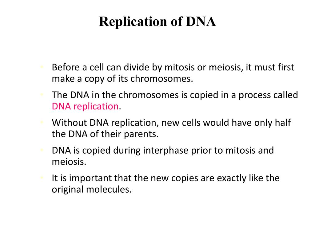 PPT - Ch. 12.2: Replication of DNA PowerPoint Presentation ...