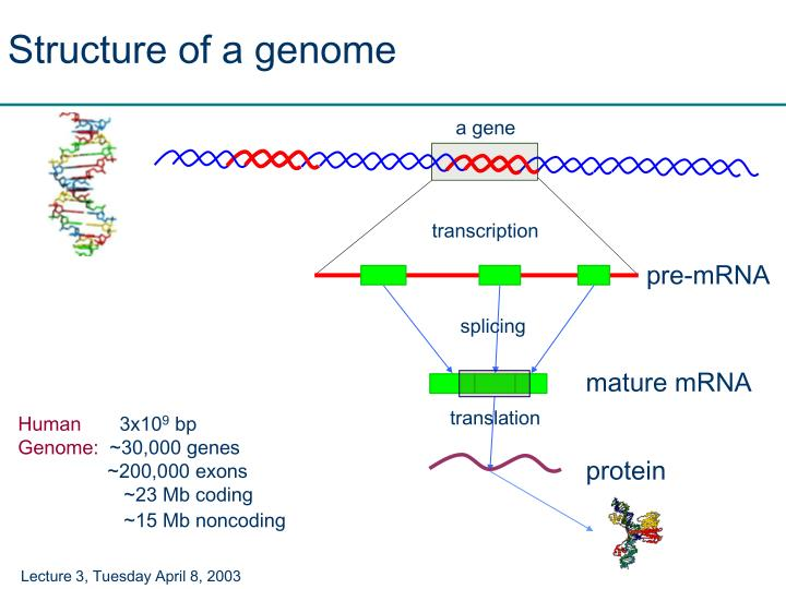 Structure of a genome