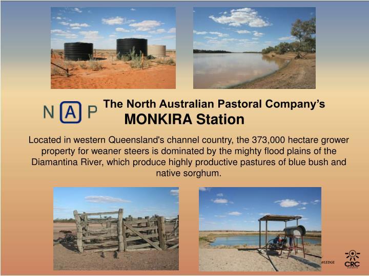 The North Australian Pastoral Company's