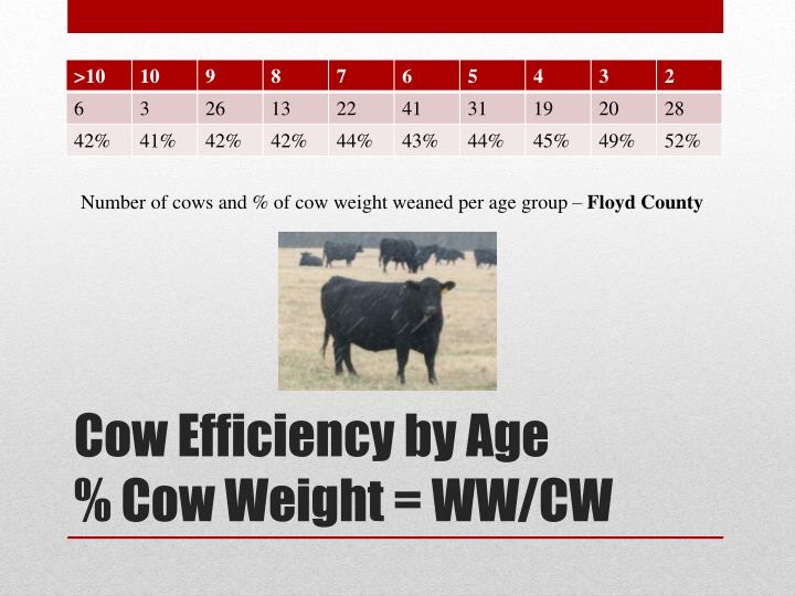 Number of cows and % of cow weight weaned per age group –