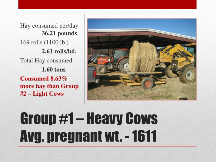 Hay consumed per/day