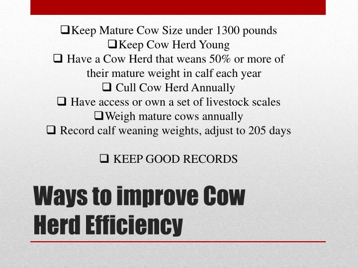 Keep Mature Cow Size under 1300 pounds