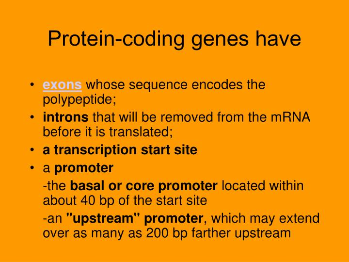 Protein-coding genes have
