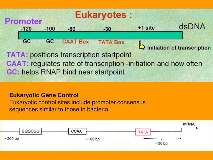 Eukaryotic Gene Control