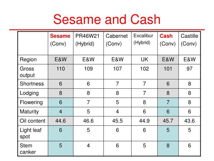 Sesame and Cash