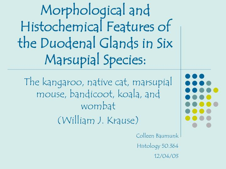 morphological and histochemical features of the duodenal glands in six marsupial species