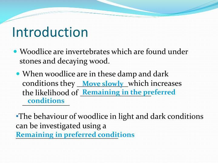 woodlice behaviour