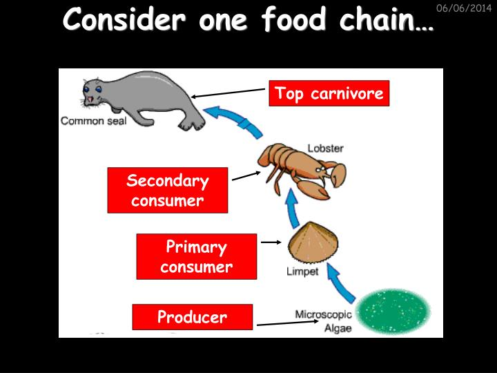 Consider one food chain…