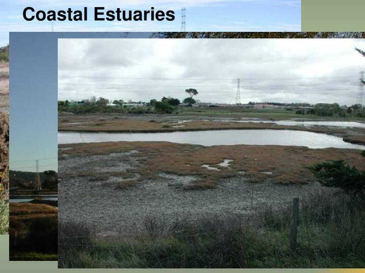 Coastal Estuaries
