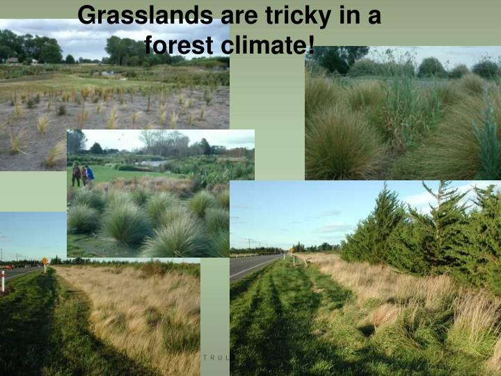 Grasslands are tricky in a forest climate!