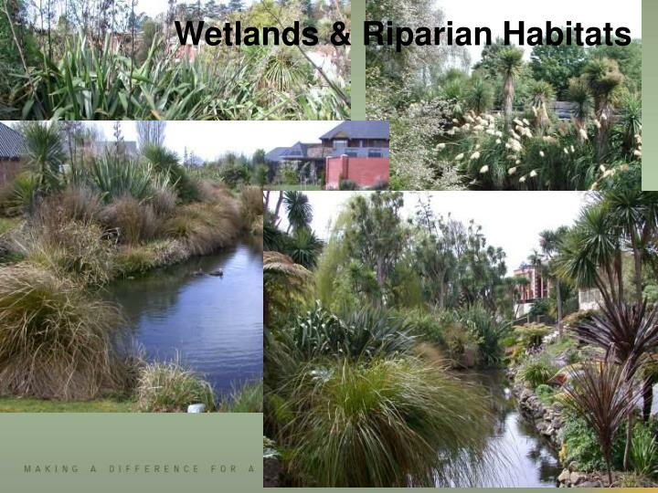 Wetlands & Riparian Habitats