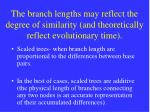 the branch lengths may reflect the degree of similarity and theoretically reflect evolutionary time