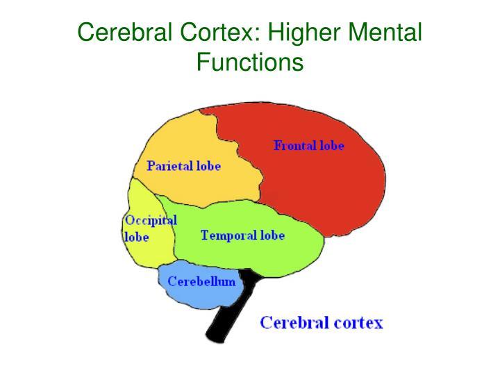 Cerebral Cortex: Higher Mental Functions