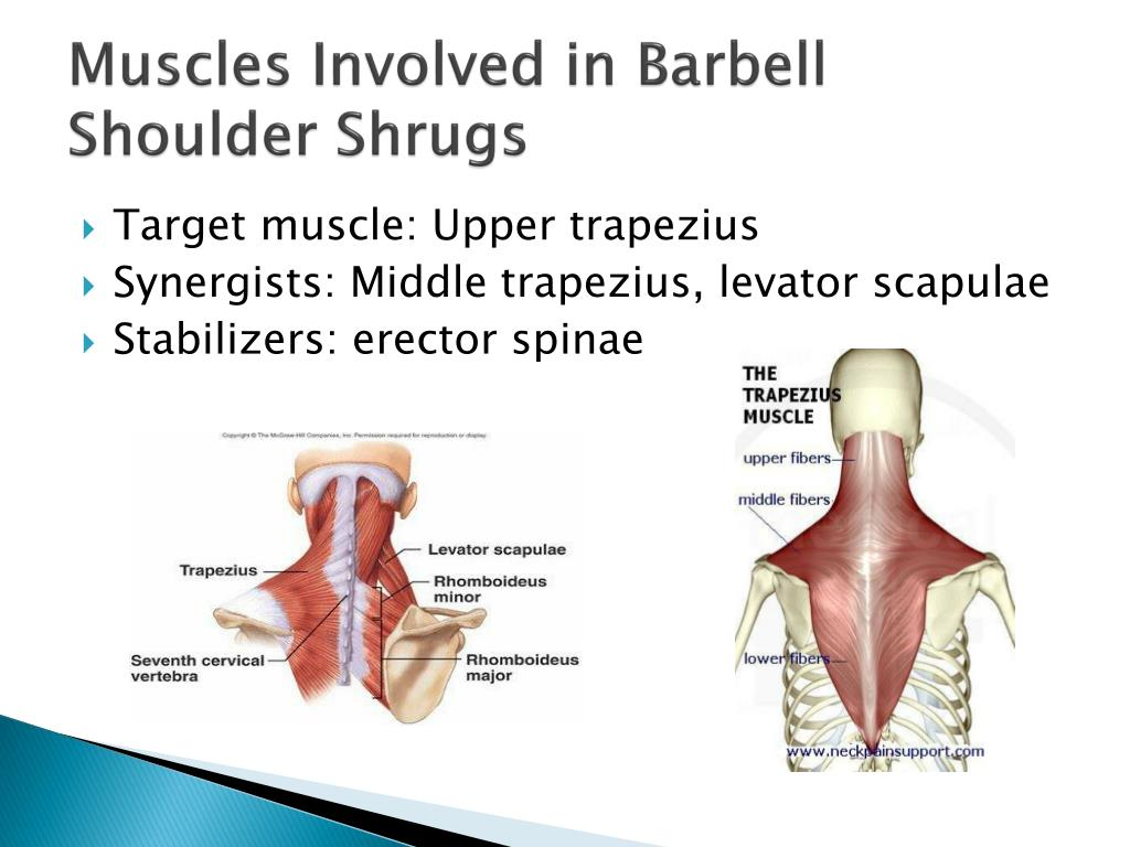 PPT - Barbell Shoulder Shrugs PowerPoint Presentation - ID