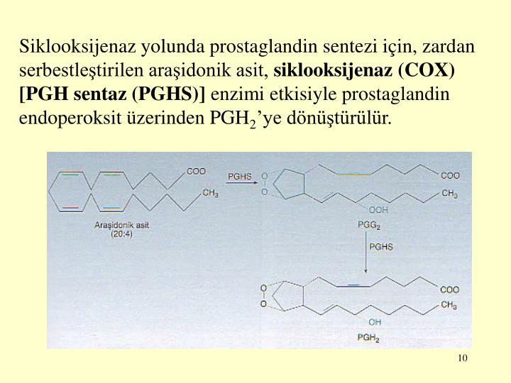 Siklooksijenaz yolunda prostaglandin sentezi için, zardan serbestleştirilen araşidonik asit,