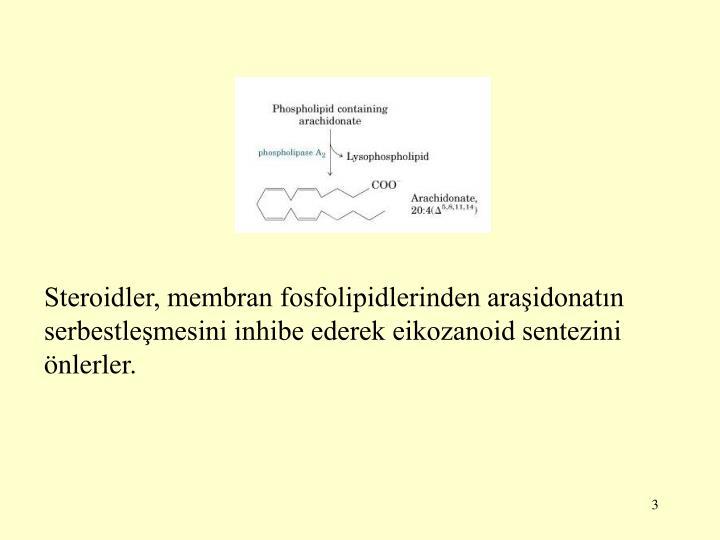 Steroidler, membran fosfolipidlerinden araşidonatın serbestleşmesini inhibe ederek eikozanoid sen...