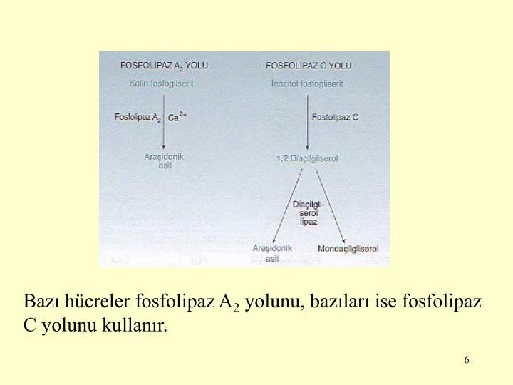 Bazı hücreler fosfolipaz A