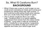 so what is caralluma burn background