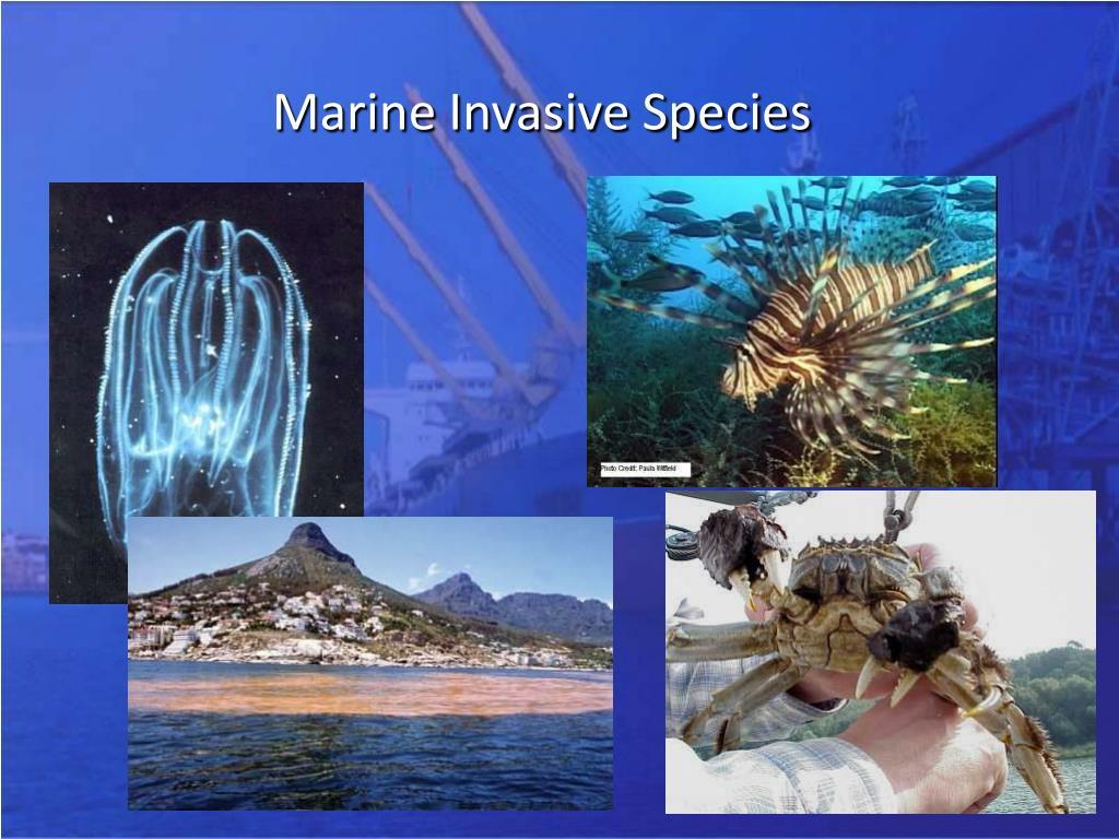 Marine Invasive Species