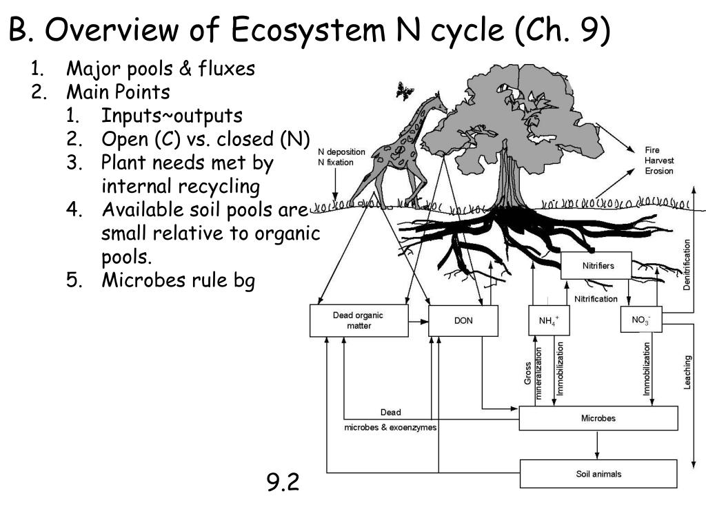 B. Overview of Ecosystem N cycle (Ch. 9)