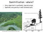 denitrification where