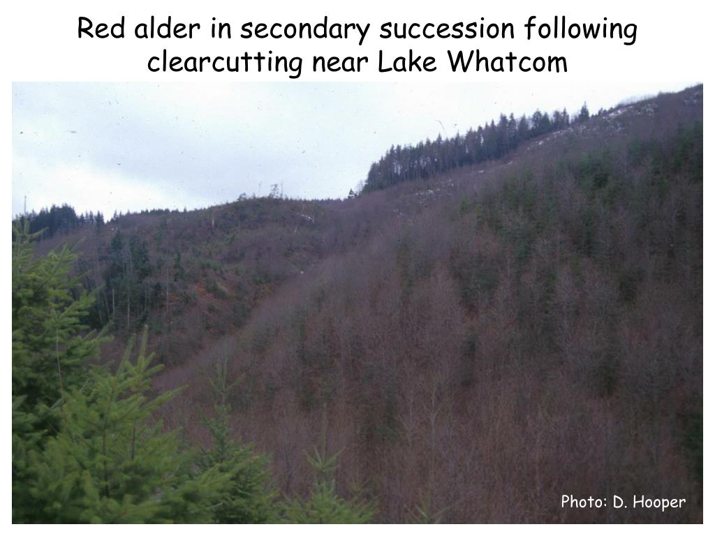 Red alder in secondary succession following clearcutting near Lake Whatcom