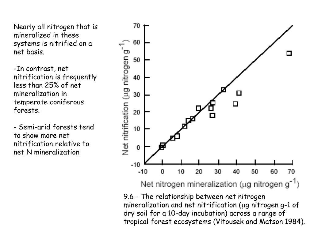 Nearly all nitrogen that is  mineralized in these systems is nitrified on a net basis.