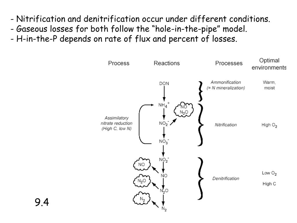 Nitrification and denitrification occur under different conditions.