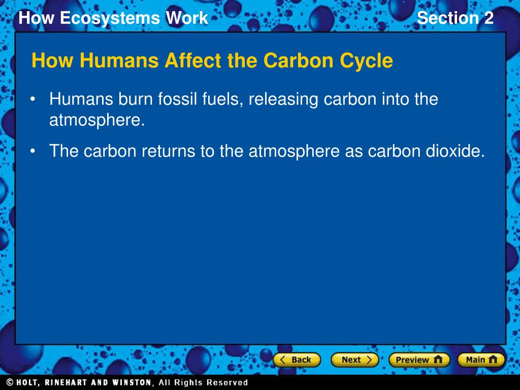 How Humans Affect the Carbon Cycle