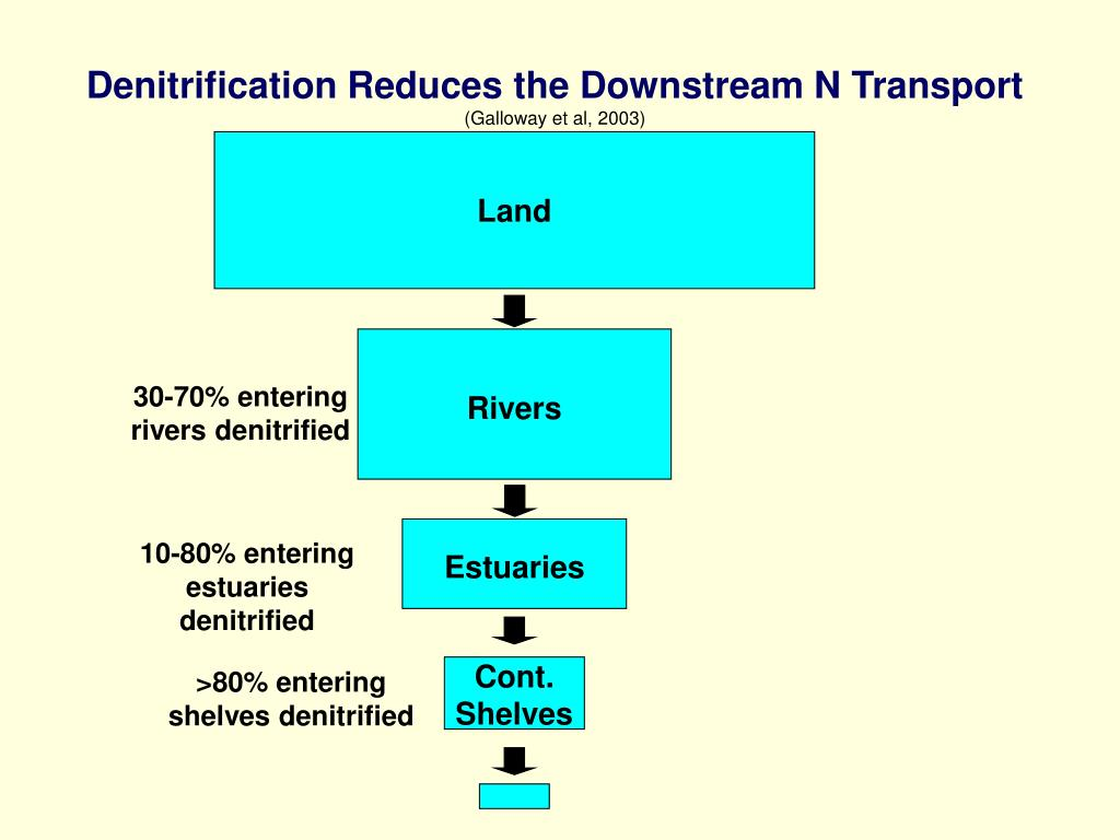 Denitrification Reduces the Downstream N Transport