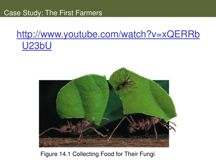 Case study the first farmers