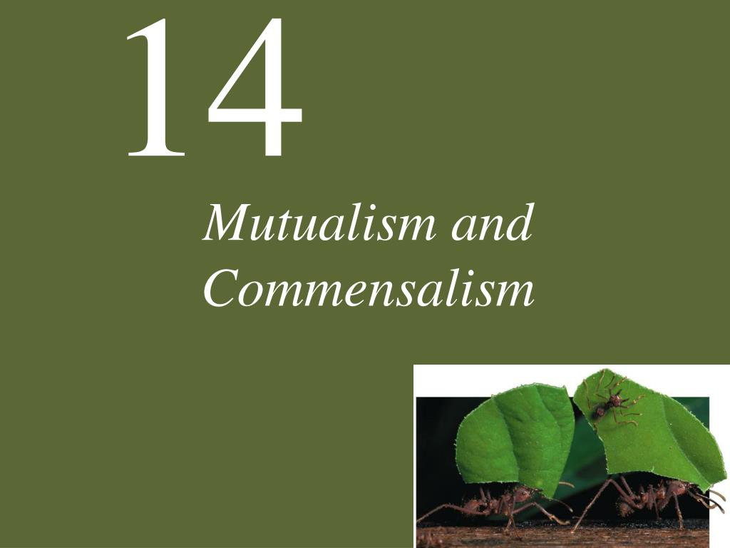mutualism and commensalism l.